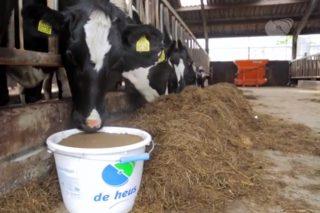 De Heus Nutrición Animal lanza su plan Kaliber de recría de novillas