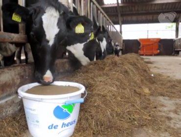 De Heus Nutrición Animal lanza o seu plan Kaliber de recría de xovencas