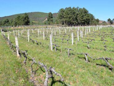 Xornada sobre alternativas ao uso de herbicidas en viñedo