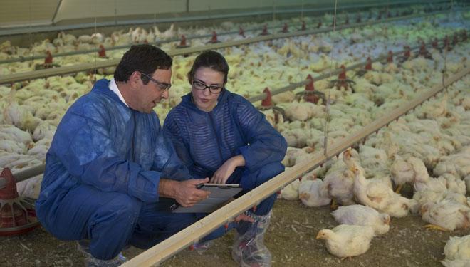 Servicio de asesoramiento de Hipra a una explotación avícola.