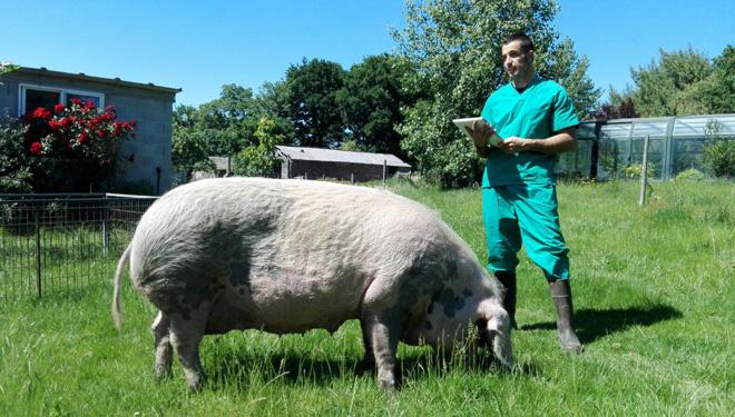"""""""La mejor manera de conservar el Porco Celta es haciendo que sea rentable criarlo"""""""