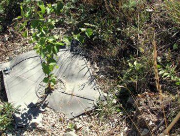 Innovaciones contra la sequía y la vegetación competidora en plantaciones forestales