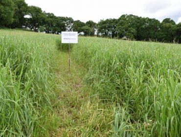 Jornada técnica sobre cultivo de maíz y praderas en la Galicia interior