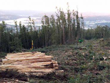 Que lle aporta a certificación forestal ao propietario?