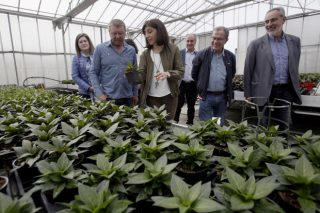 A planta ornamental de Galicia factura preto de 40 millóns ao ano
