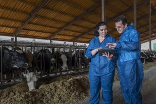 Las campañas de saneamiento ganadero inspeccionaron 36.377 granjas gallegas en 2017
