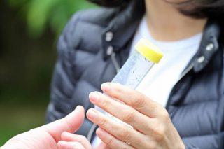 Medio Rural soltou 130.000 insectos parásitos da avespiña do castiñeiro
