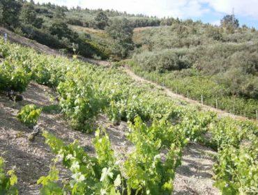 A futura PAC para o sector galego do viño