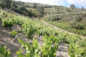 Viñedo de Quinta da Muradella en la montaña. Autor: vinoencasa.blogspot.com.es