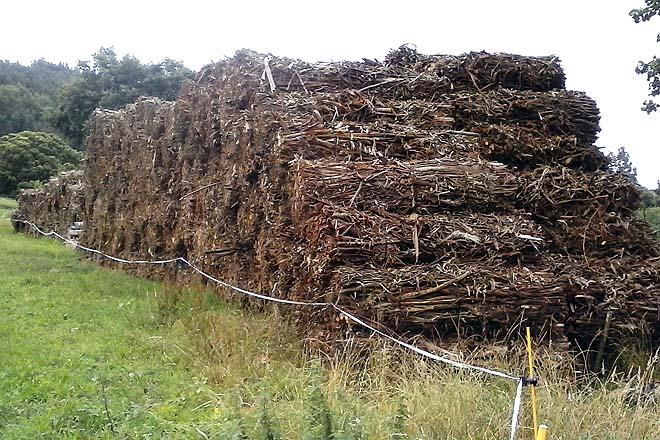 A planta de biomasa de Curtis consumirá só restos forestais
