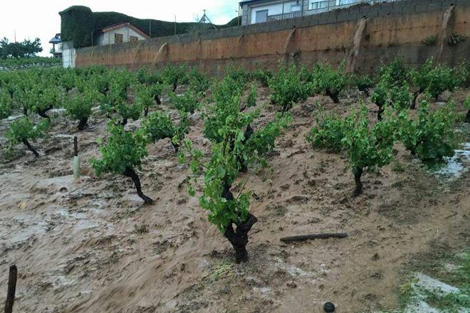 A saraiba arrasa gran parte dos viñedos de O Barco e Vilamartín de Valdeorras