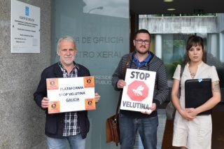 Demandan que el Ministerio se sume a la lucha contra la Vespa Velutina