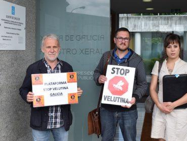 Demandan que a Consellería de Medio Ambiente e o Ministerio se sumen á loita contra a Vespa Velutina