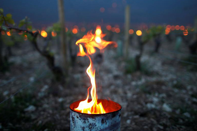 Métodos de protección das viñas ante a xeada