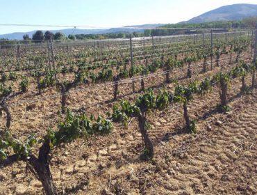Os consellos reguladores das DO Valdeorras e Monterrei piden a declaración de zona catastrófica