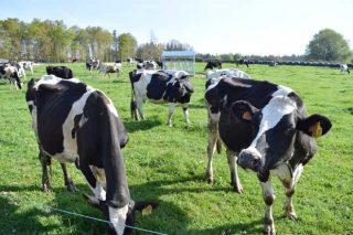 10 granjas gallegas participan en un proyecto europeo para mejorar la eficiencia económica en vacuno de leche