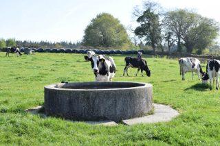 Curso sobre alimentación en auga e minerais en sistemas de pastoreo