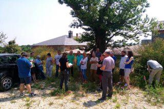 Galicia marca o ritmo na produción de leite ecolóxico en España