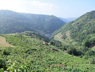 A USC forma a viticultores da Ribeira Sacra para adaptarse ao cambio climático