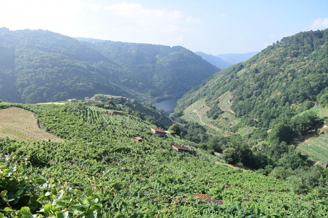Unións critica que el plan del Ministerio de ayudas al sector del vino no se adapta a Galicia