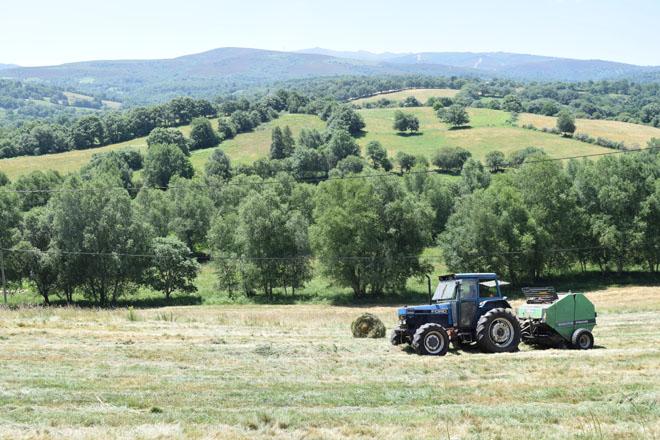 A Xunta destaca que xa pagou as axudas da PAC a 25.000 gandeiros e agricultores