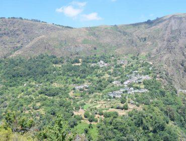 (IV) Case un terzo do territorio galego está a mato ou abandonado