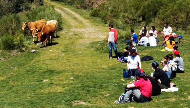 Excursión na Campa de Tres Bispos, durante o paso do rabaño de vacas.