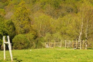 Medio Ambiente convoca ayudas para zonas de Rede Natura y parques naturales