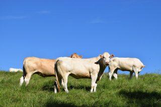 A Xunta incrementará o vindeiro ano nun 8% as axudas á contratación de seguros agrarios e gandeiros