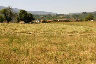 Gandeiros galegos reclaman axudas pola seca como as establecidas noutras Comunidades Autónomas