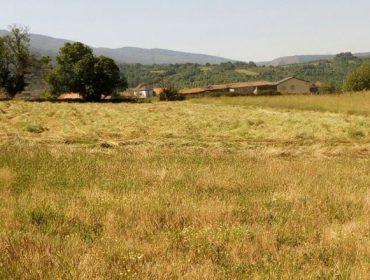 Ganaderos gallegos reclaman ayudas por la sequía como las establecidas en otras Comunidades Autónomas