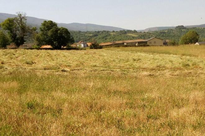 Un total de 164 produtores galegos reciben dereitos da Reserva Nacional de Pago Básico da PAC