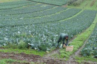 A Xunta aprobará neste semestre axudas para o sector da horta e porá en marcha un selo de calidade