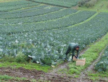 Advierten de que la subida del salario mínimo disparará un 50,4% los costes laborales para los agricultores