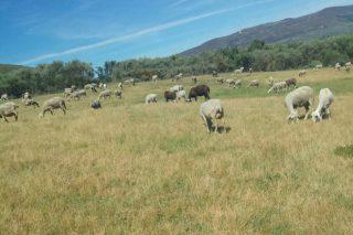 Convocados apoyos a la financiación para explotaciones afectadas por la sequía