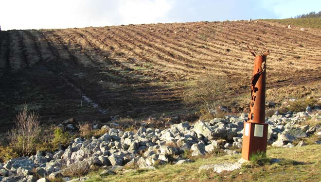 Plantación de eucaliptos no Pedregal de Irimia, área de nacemento do río Miño.