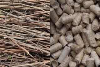 Un proyecto aborda el uso de restos de poda y matorral para biocombustibles