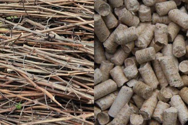 Un proxecto aborda o uso de restos de poda e mato para biocombustibles