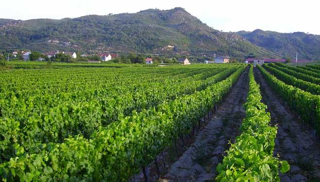 """""""Buscamos a naturalidade dos viños, respetando a terra e o medio"""""""