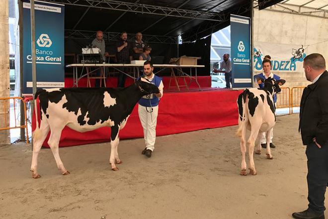Resultados del concurso de vacas y de manejadores de Feiradeza 2017