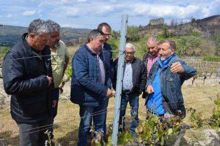 Curso práctico de poda en verde en Monterrei