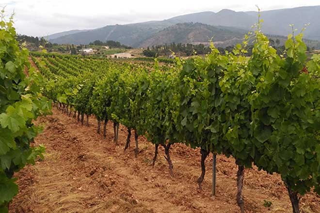 Ruchel, rich wines from poor soil