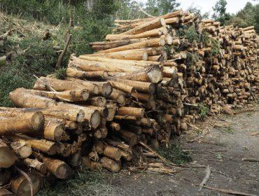 Cadena de custodia, madera certificada del monte al consumidor