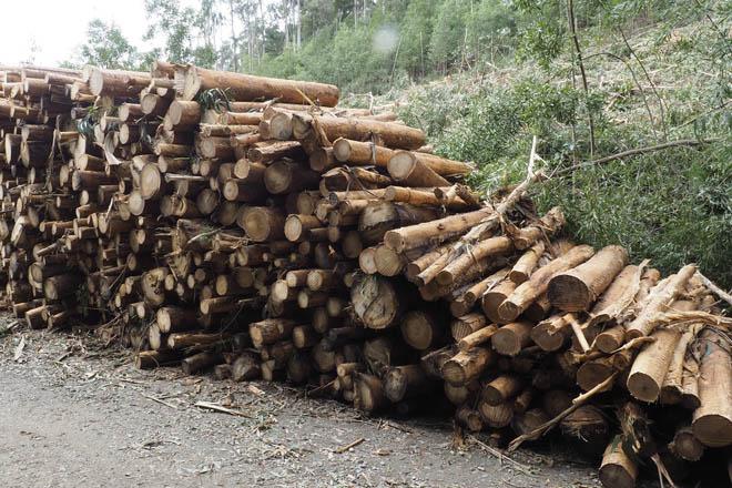 Cadea de custodia, madeira certificada do monte ó consumidor