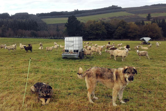 Acordo do sector gandeiro sobre os cambios que debe facer a Xunta nas axudas para prevención de ataques do xabarín e do lobo