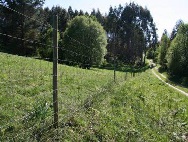 Xornada sobre coexistencia de lobo e oso coa gandería extensiva e a apicultura
