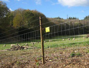 Demandan a autorización de esperas ó lobo por danos en Chantada