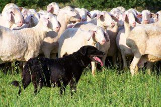 Charlas en el rural de la provincia de Lugo sobre la nueva norma de tenencia de perros