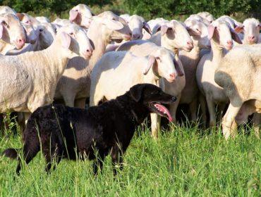 Charlas no rural da provincia de Lugo sobre a nova norma de tenza de cans