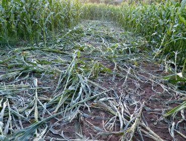 Unións urxe a Medio Ambiente a que concrete as medidas para o control do xabaril no Deza